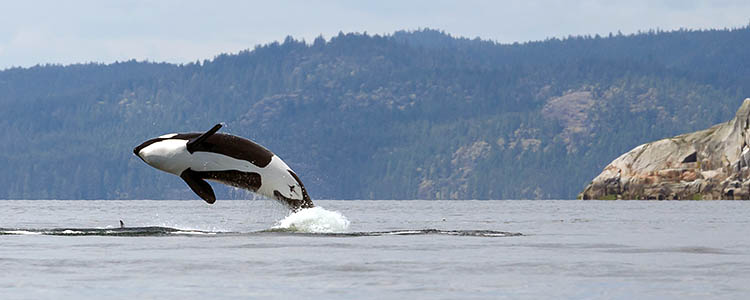 Best Time to cruise alaska to see whales